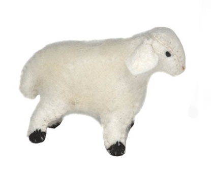 Picture of White lamb